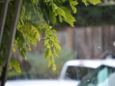 雨、シアトル。